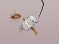 العاب حماية البيض من هجوم الصراصير